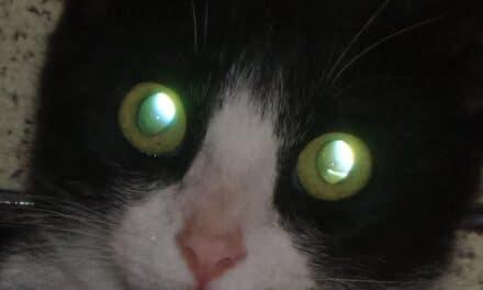 Traumi agli occhi (lesioni da petardi)